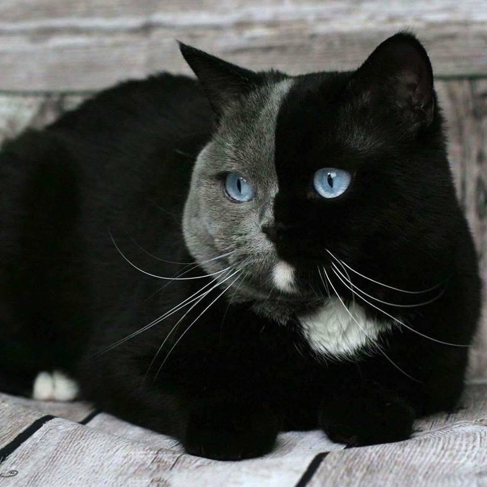 мозаик кошка