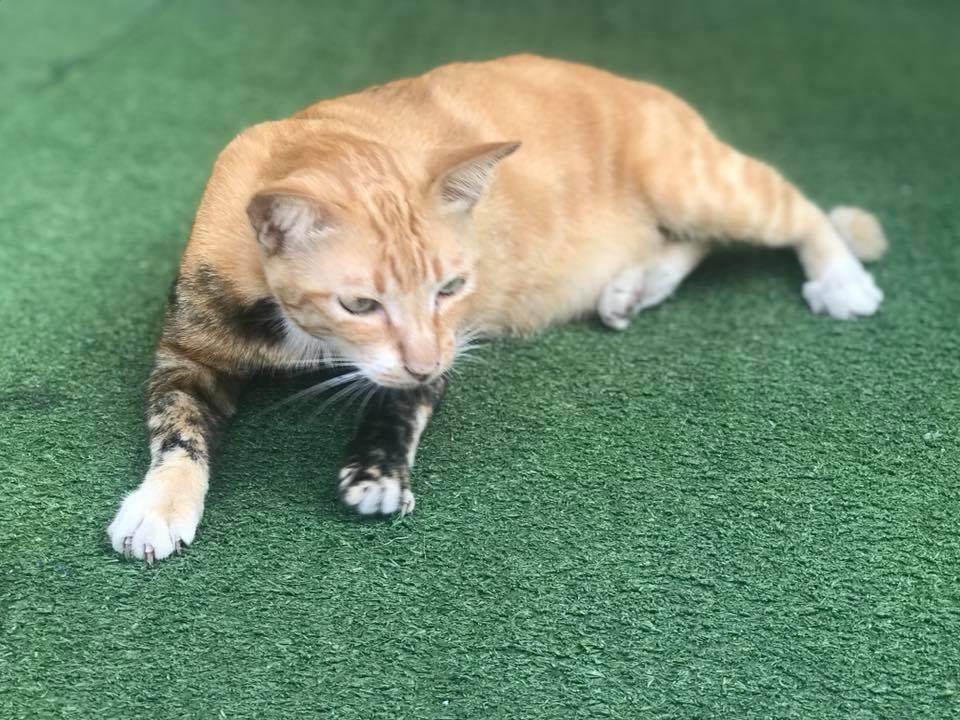 мозаик кот