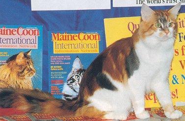 химера кот