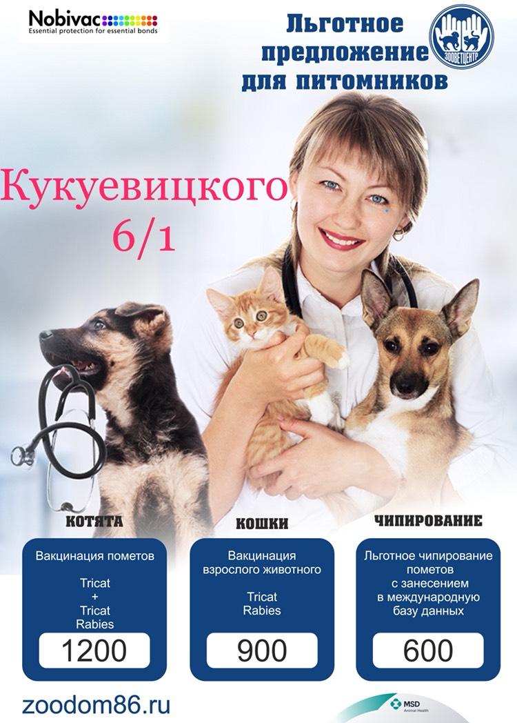 15 апреля 2018 года. Международная выставка кошек. AFC, г.Сургут Kukushka